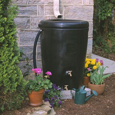 Regar o seu jardim a partir de um tambor de chuva, em vez de a torneira para um'greener' garden. [Credit