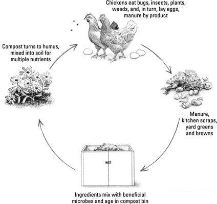 ���� - Como criar Sustentabilidade em seu próprio quintal com galinhas