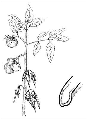 ���� - Como lidar com doenças comuns do jardim