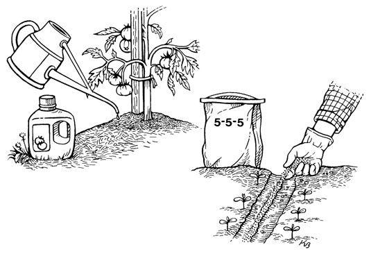 ���� - Como fertilizantes como um Vestir Side em jardinagem urbana