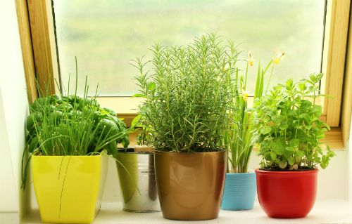 ���� - Como crescer ervas Interior