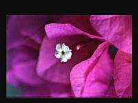 ���� - Como visualizar as imagens em seu Canon EOS 6D