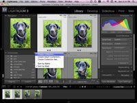 ���� - Como configurar coleções de seu cão fotos dentro Lightroom