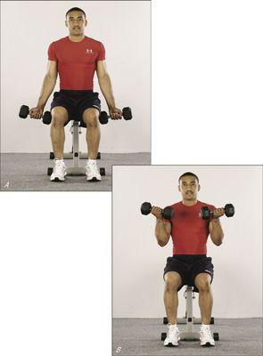 ���� - Como tonificar os bíceps com cachos assentados