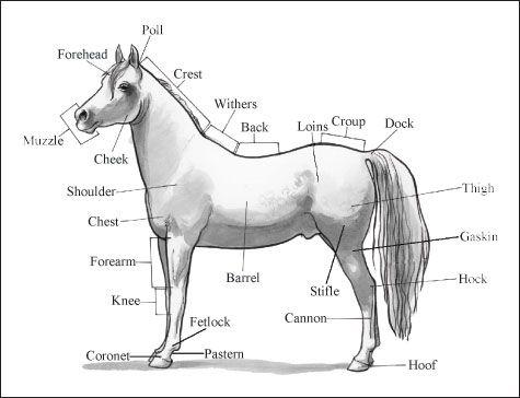 ���� - Identificação das peças e marcas cavalo
