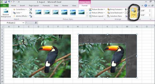 Você pode cortar uma imagem para remover áreas indesejadas de uma imagem.
