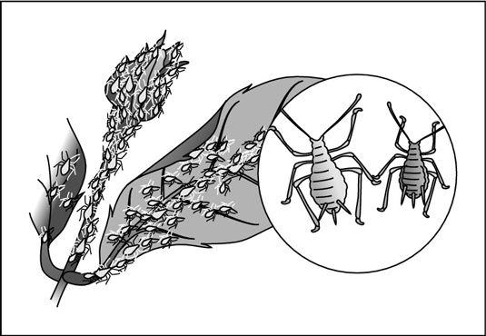 ���� - Orquídeas: Como identificar e controlar as pragas comuns