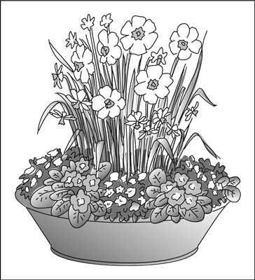 ���� - Plantar uma Early Spring Container Garden