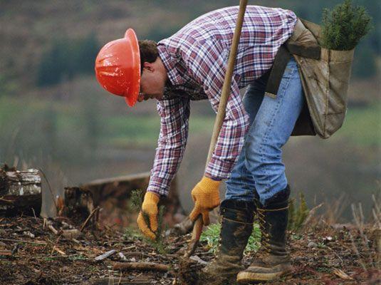 ���� - Plantar árvores: um projeto da comunidade verde