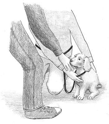Órtese reafirma o seu cachorro jovem quando encontro pessoas desconhecidas. [Crédito: Ilustração por Barbara