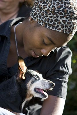���� - Tire fotos de cães no colo de seus seres humanos