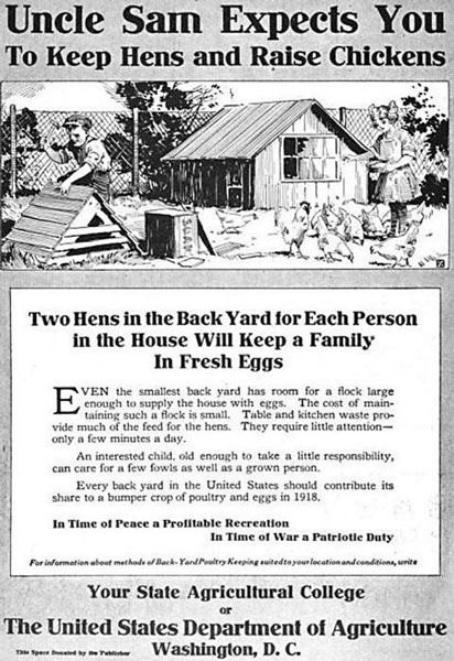 ���� - A evolução de Jardinagem e galinhas Mantendo