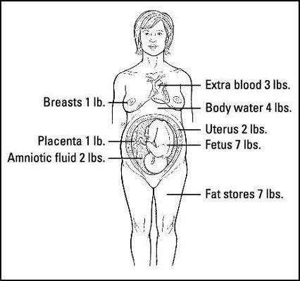 ���� - Onde o seu peso da gravidez Go?